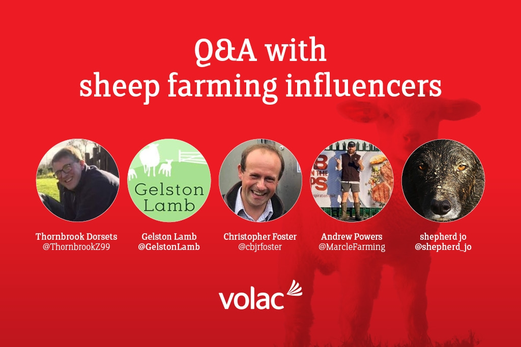 Tips for successful lambing: Q&A with sheep farming influencers