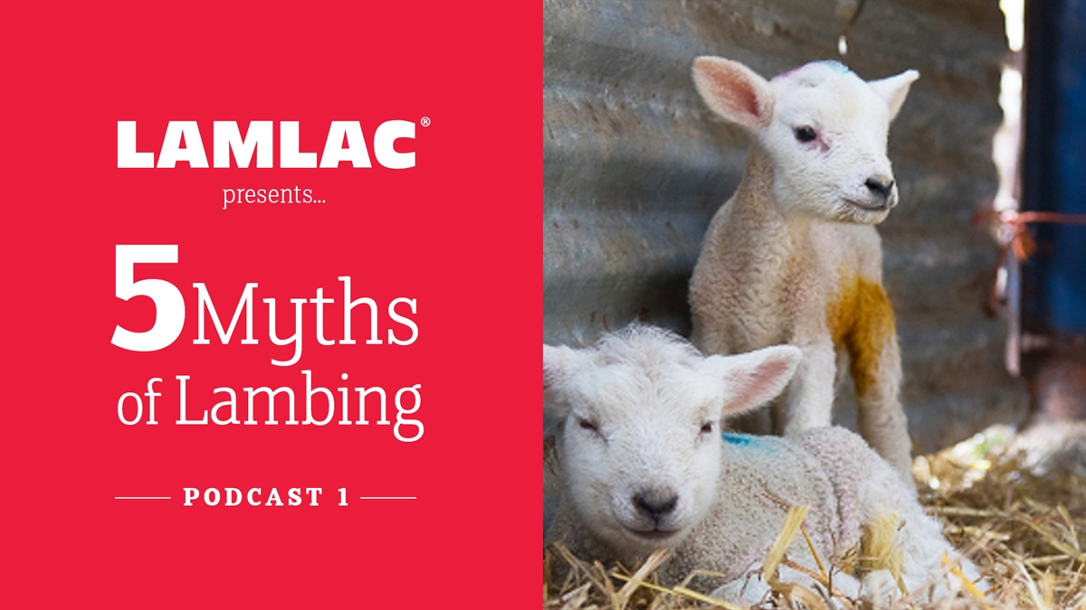 PODCAST: 5 myths of lambing