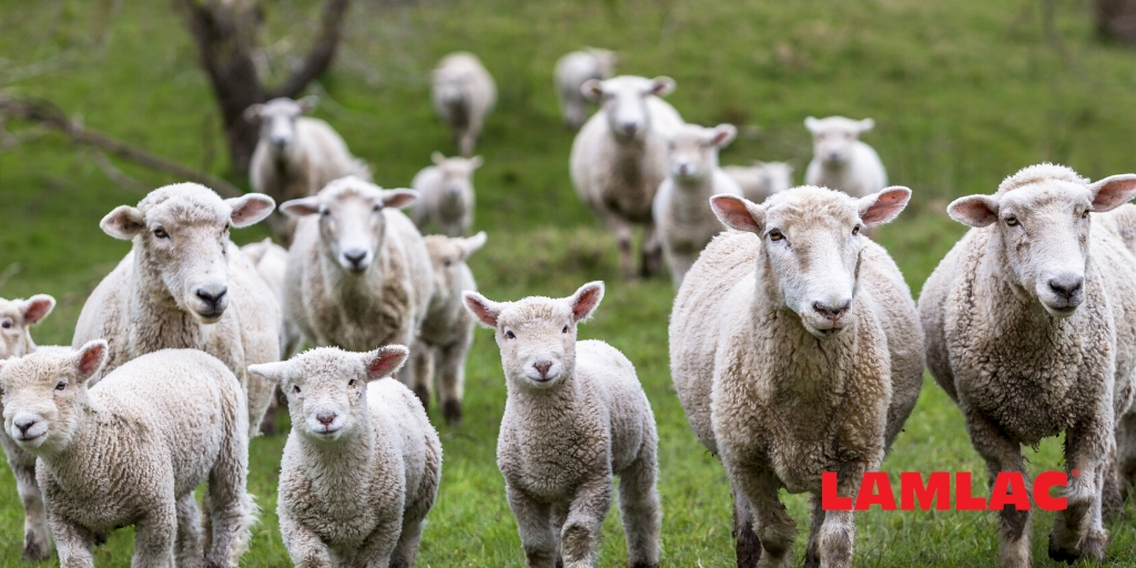 Lambing season advice: how data gathering can improve productivity and profits