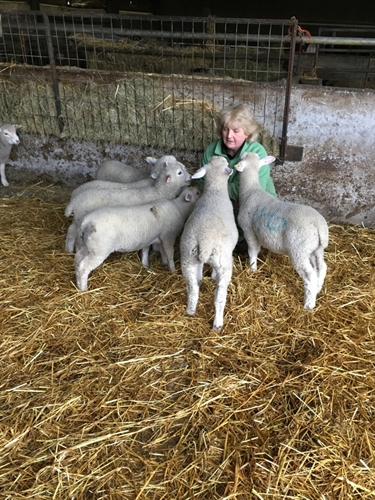 Advocate of surplus lamb rearing relies on Lamlac