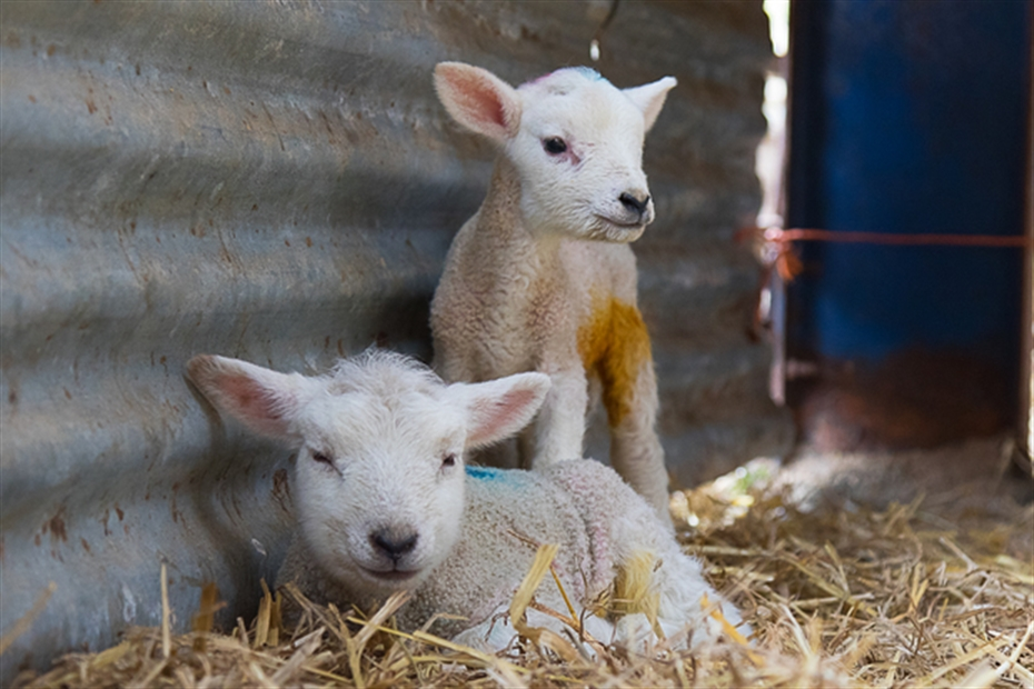 Gear up for lambing