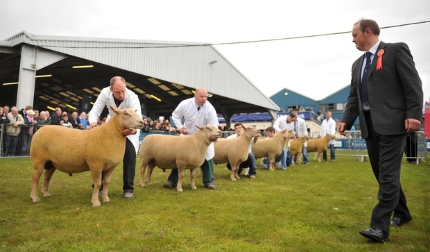 Join Lamlac at NSA Sheep 2018
