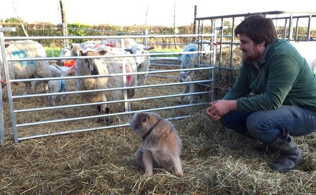 From farm to fork with the Cambridge Lamb Company