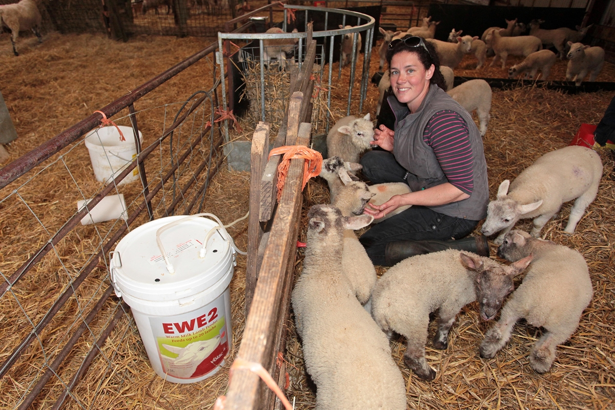 Lambing advice at your fingertips