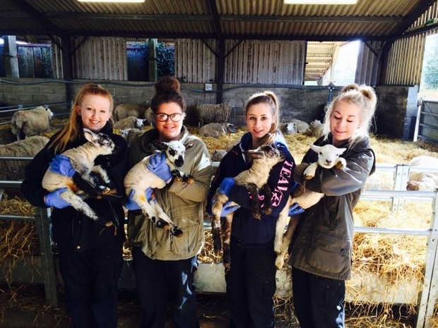 Finding the right lambing staff